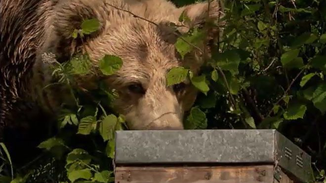 Temporada 1 Programa 3 - El oso goloso
