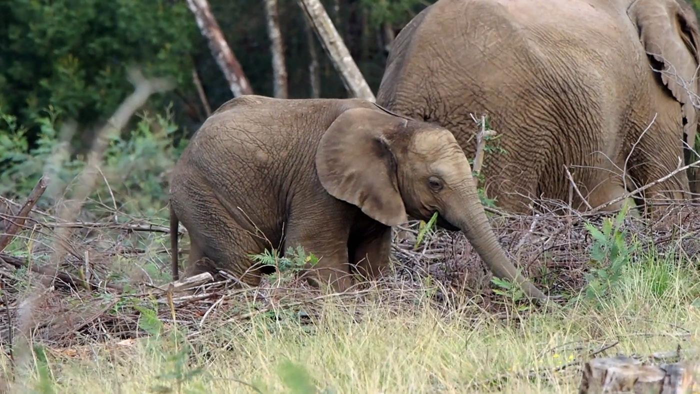 Gondwana Programa 3 - ¡Encuentra al elefante!