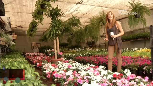 Mercado de Flores de Nativitas