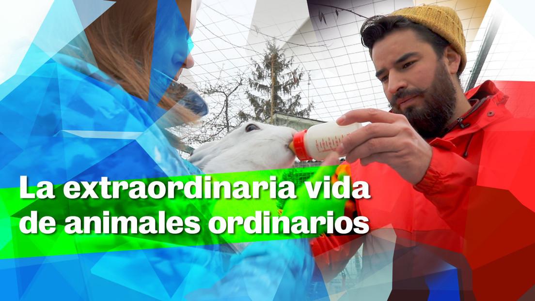 2020-02-28 - La extraordinaria vida de animales ordinarios