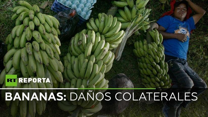 2018-11-23 - Trabajadores en bananeras de Ecuador: