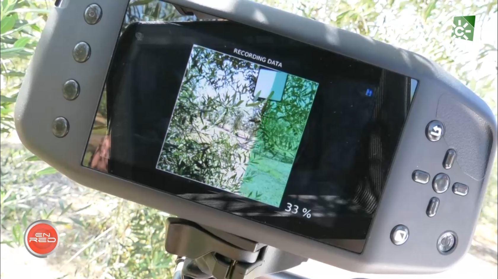 Nuevas tecnologías al olivar de mesa (22/06/2021)