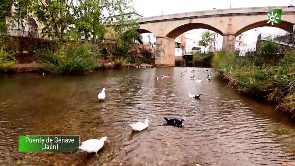 Puente de Génave (Jaén), Carmona (Sevilla) y Zuheros (Córdoba)  (22/11/2020)