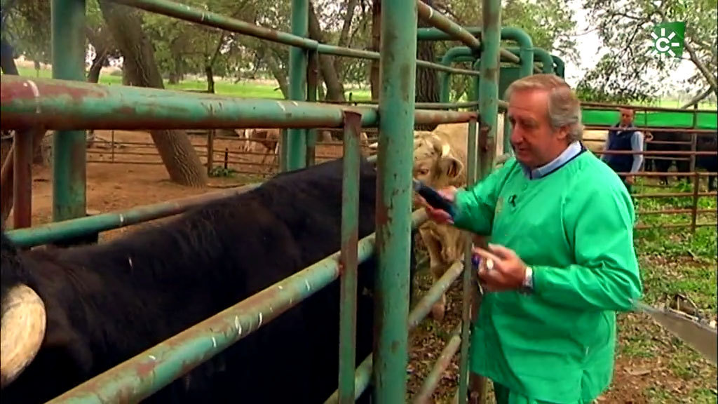 El trabajo diario de los veterinarios con el ganado a pie de campo (11/10/2020)