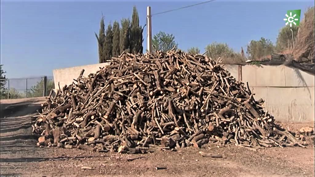 La poda del olivo es un gran recurso para los espetos de Málaga (12/04/2020)