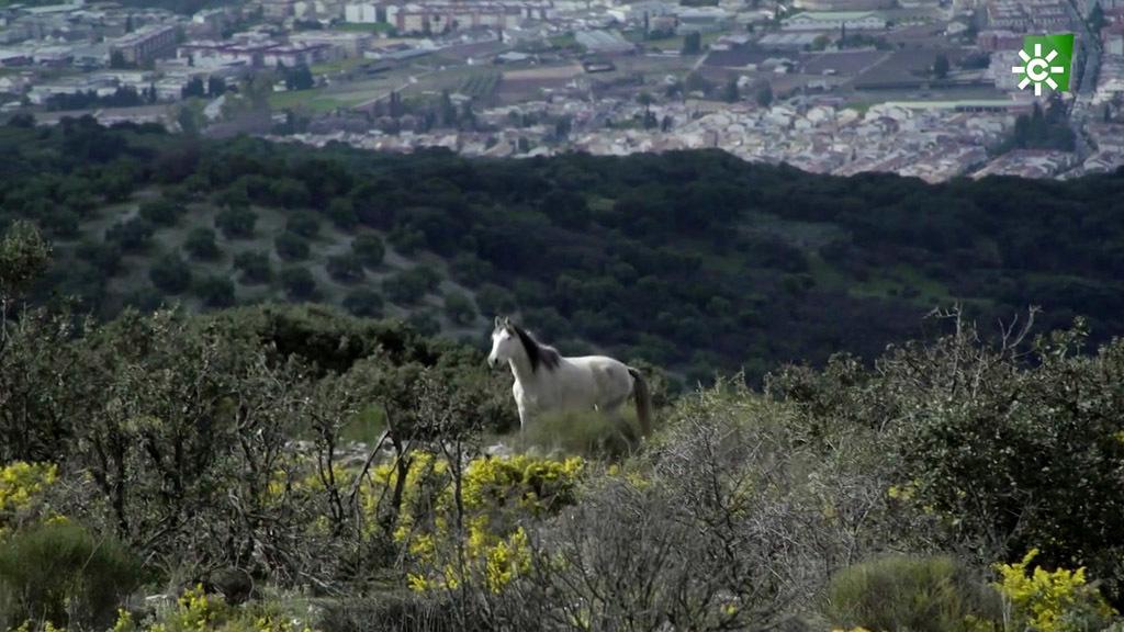 La crianza de caballos entre piedras y cuestas (14/03/2020)