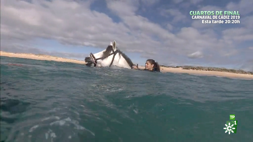 La terapia del mar para sanar al caballo (17/02/2019)