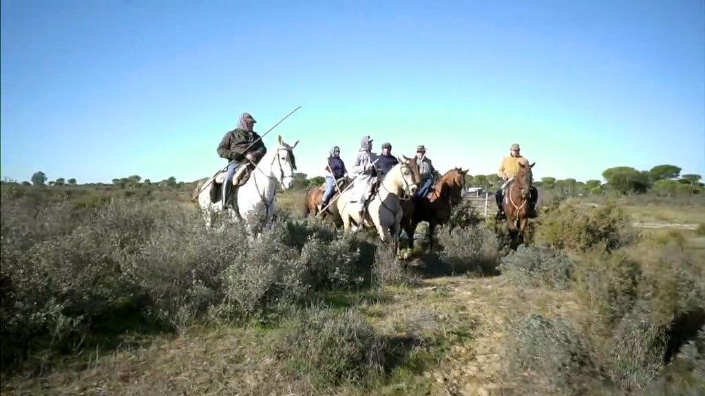 La vida de los caballos salvajes de Doñana (03/02/2019)