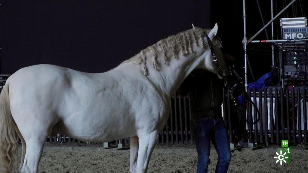 Los mejores ejemplares y ganaderías del mundo (30/11/2019)