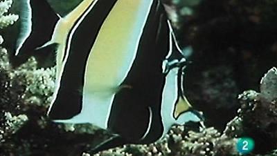 Las joyas del arrecife