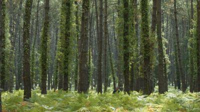 Bosques por el mundo, las Landas