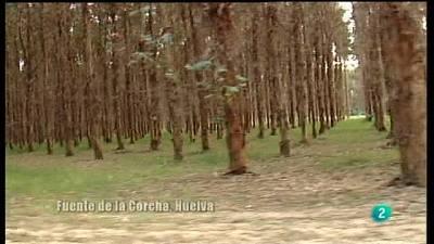 El papel del eucalipto