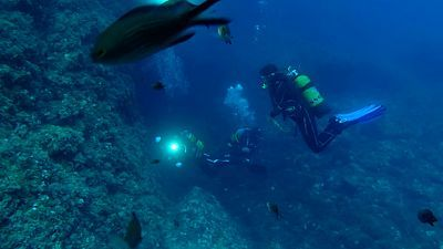 Observadores del mar