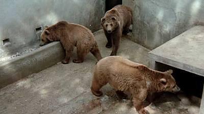 (Fauna ibérica) - El Hosquillo, osos