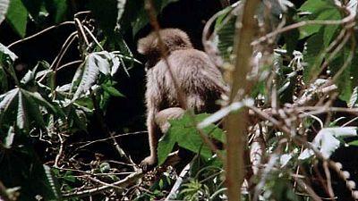 (Serie venezolana) - La selva virgen venezolana