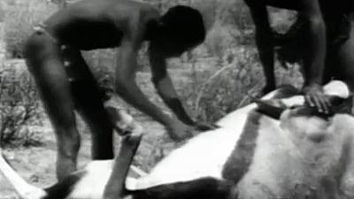 Fauna - Los bosquimanos en el Kalahari (II)