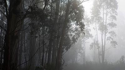 Posibles brumas o nieblas matinales en el interior de Galicia y el Cantábrico
