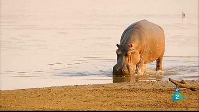 Grans documentals -  La vall indòmita: La llacuna dels hipopòtams