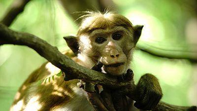 La isla de los monos - Episodio 2: Irse de casa