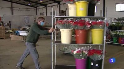 El sector andaluz de la flor cortada, pendiente de San Valentín