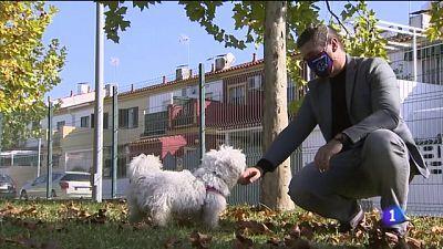 Perros adiestrados para detectar covid