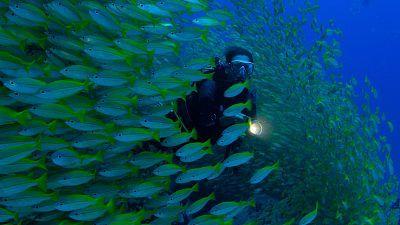 Somos documentales - Planeta perpétuo. Héroes de los océanos