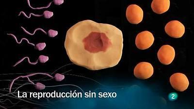 La reproducción sin sexo