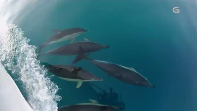 Baleas na costa galega - 11/11/2017 15:15