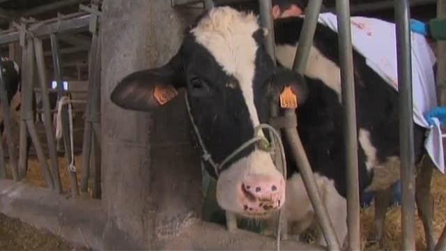 A escola do mestre Tonecho / A vaca Kala / O viveiro de Xosé Manuel - 23/03/2015 23:15