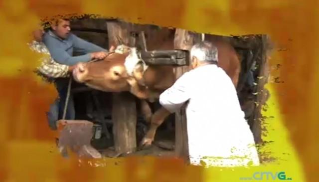 Cap. 113: Vacas felices - 16/01/2011 22:06