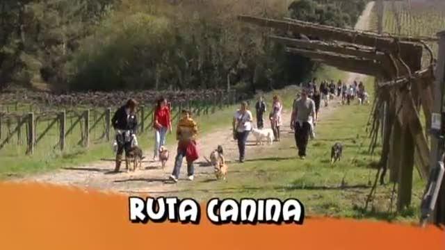 Cap. 118: Solidario cos animais do refuxio de Cambados - 10/12/2011 22:00