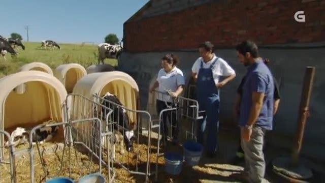 Cap 150: A familia máis vacuna / Paseo canino / Abela Arán e os seus cadelos / Máis que exótico - 01/02/2015 00:00