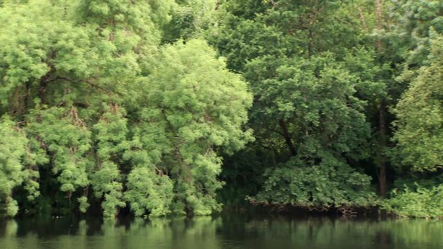 A protección dos bosques de ribeira - 10/10/2020 13:50