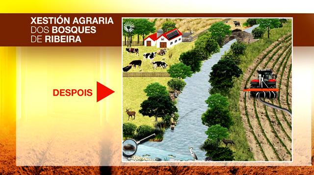 A xestión agraria dos bosques de ribeira - 03/04/2021 13:50