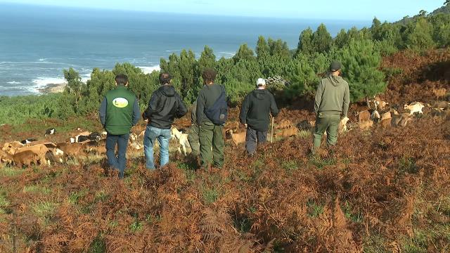 O silvopastoreo e a recuperación da gandería extensiva nos montes da provincia de Pontevedra - 15/12/2019 13:50