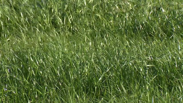 Silvicultura activa de futuro / Pegada de carbono nas granxas de leite - 02/03/2020 09:45