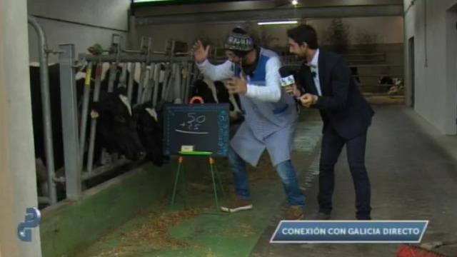 """Coñecemos a primeira vaca que sabe sumar en """"Galicia directo"""" - 14/10/2015 22:00"""
