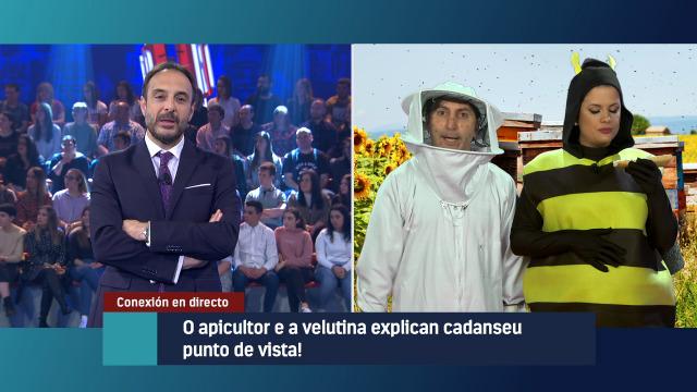 O apicultor e a 'velutina' á que intenta matar explican cadanseu punto de vista en directo - 09/05/2019 22:44