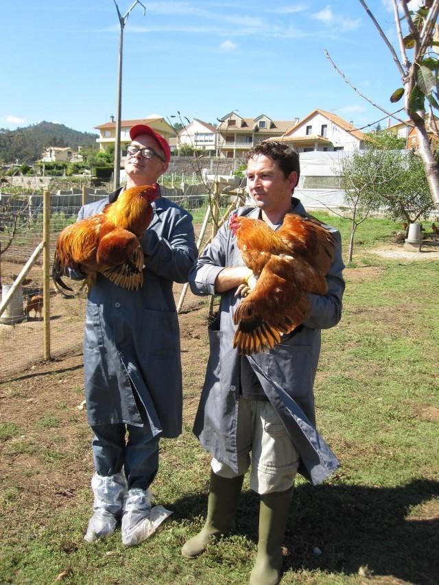 Cap. 100: Polo con alcachofas e arroz - 14/12/2011 22:15