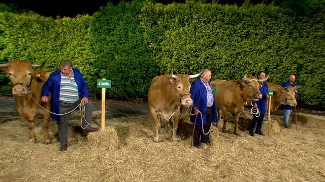 O xurado reparte os catro galardóns entre as catro vacas candidatas - 29/06/2019 01:28