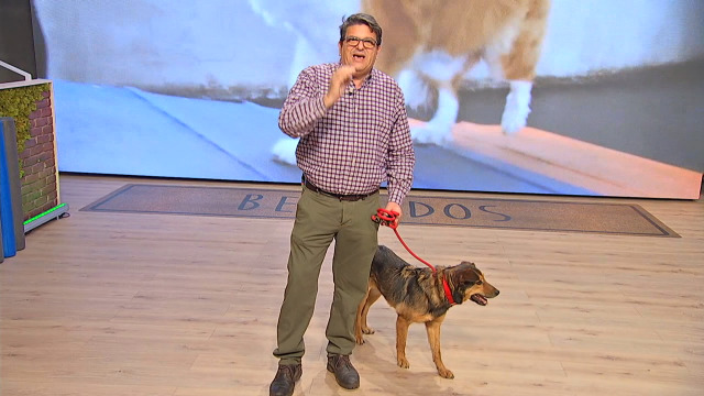 Buscamos o mellor para os nosos amigos os cans, con Octavio Villazala - 15/04/2020 14:04