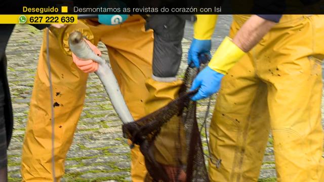 Comeza a tempada da lamprea - 09/01/2020 12:30