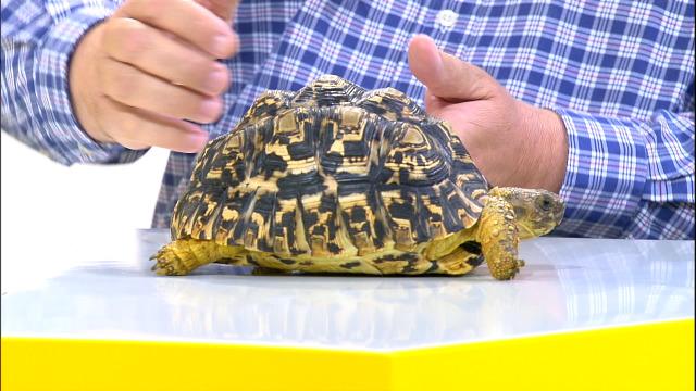 Coñecemos as tartarugas leopardo con Octavio Villazala, e buscámoslle fogar a un michiño - 15/05/2020 14:02