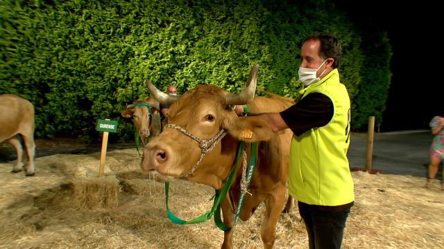 Mariposa, de Lugo, 'Miss vaca 2020' - 18/07/2020 02:00