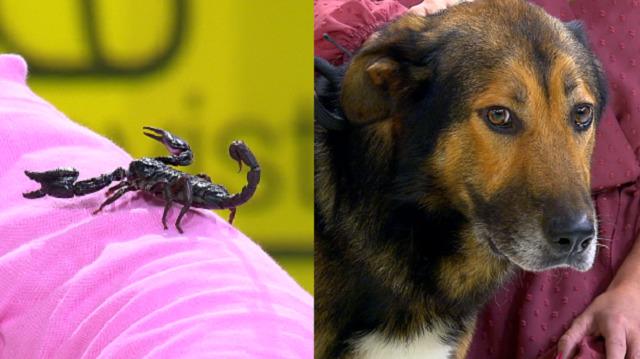 Os animaliños de Octavio: un perigoso, e buscámoslle fogar a un agarimoso e tenro can - 03/01/2020 14:32
