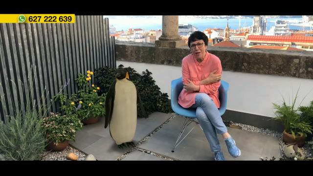 'Wonder Women', no CGAC; o pingüín de Mariana Carballal, poesía e a música das Tanxugueiras - 23/06/2020 12:00