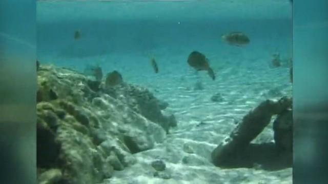 Programa 1023: Arrecifes artificiais / #Batéate / Museo do Mar da Garda - 20/12/2020 10:30