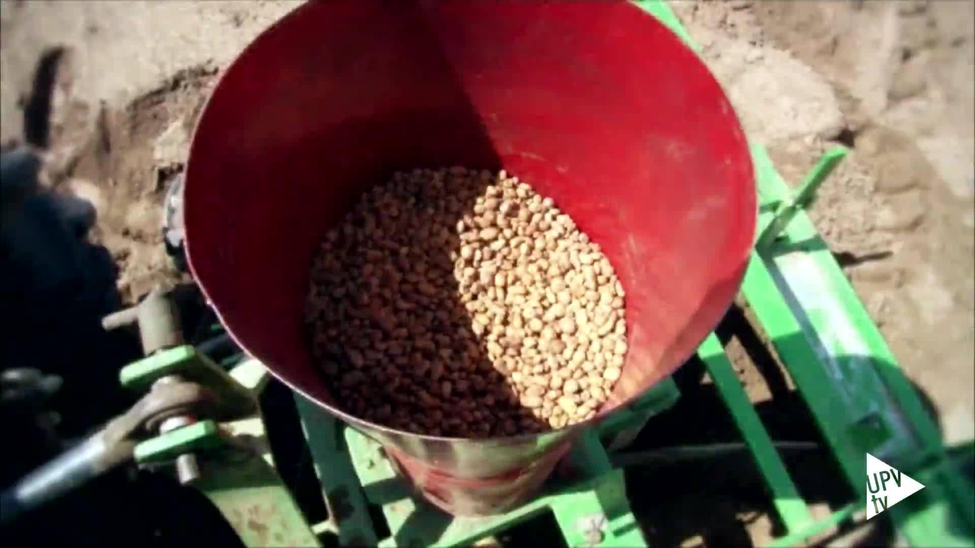 25-04-2016 Mejora del cultivo de chufas