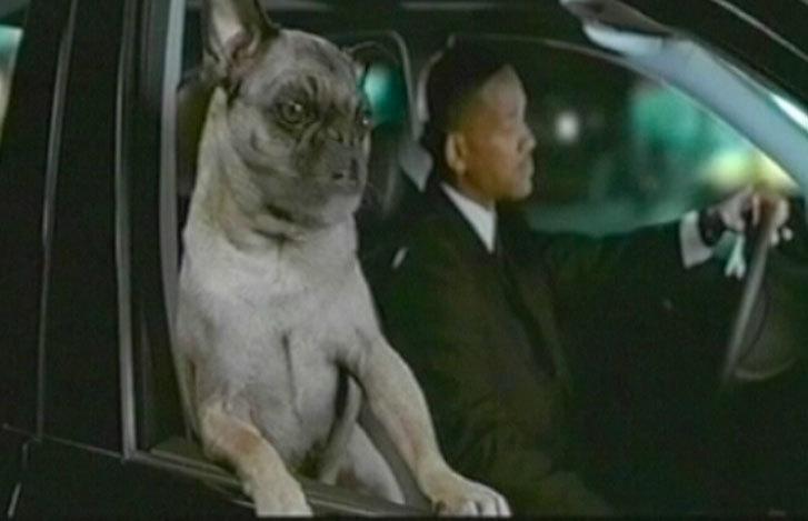 Ensinistradors de gossos