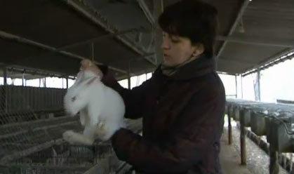 Abelles i cria de conills